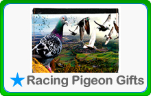 Racing Pigeon Themed Gifts